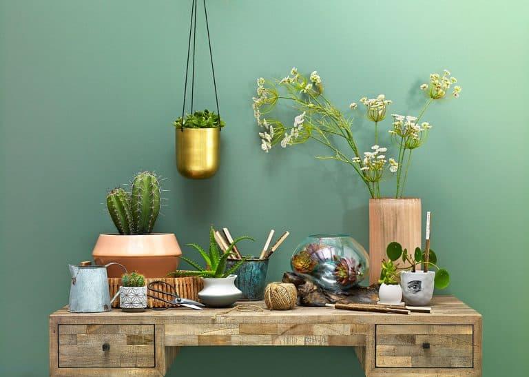 House Plants Indoor plants shoot faux Ab